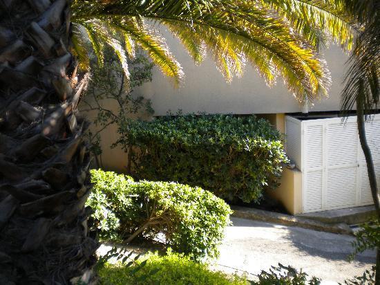 Hotel Royal Cottage: La fenêtre se trouve derrière la haie !!
