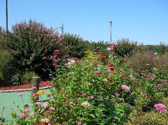 Long Neck Miniature Golf: Beautiful Flowers at Long Neck Mini-Golf