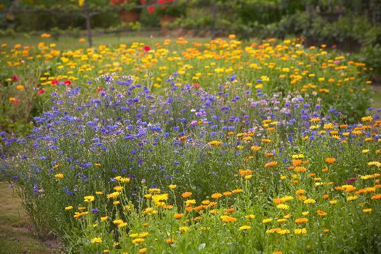 Greencrest Manor : sample of amazing gardens