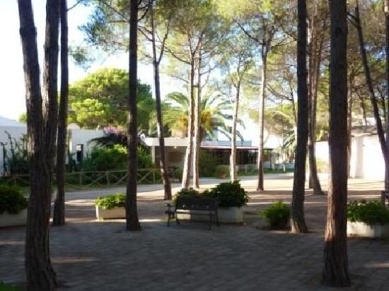 Mare Pineta : the hotel in the pine trees