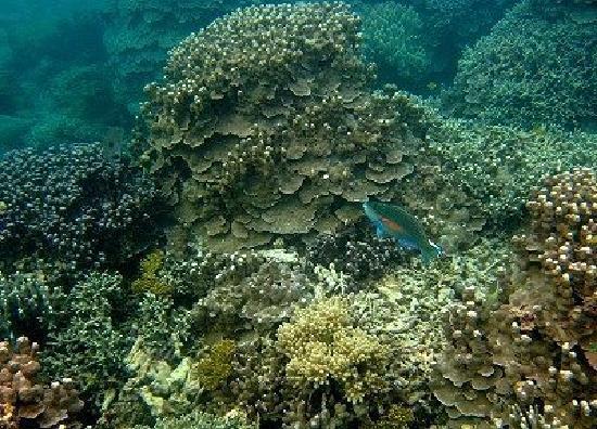 Irabu-jima Island (Miyakojima, Japan): Top Tips Before You ...