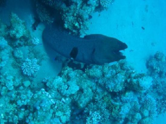 Eco Divers Dahab: Huisrif
