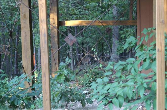 The Grand Treehouse Resort: One of the three deer that was eating under our Tree House