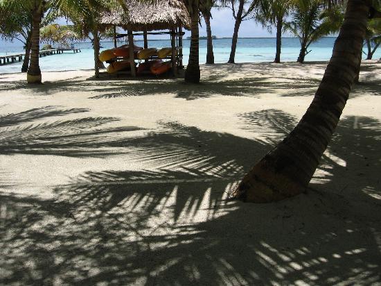 Coco Plum Island Resort: Beautiful white sand and shady palms