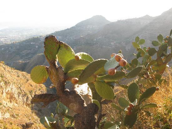 Hotel Villa Sonia: Sicilian prickly pears and stunning views from the hotel grounds