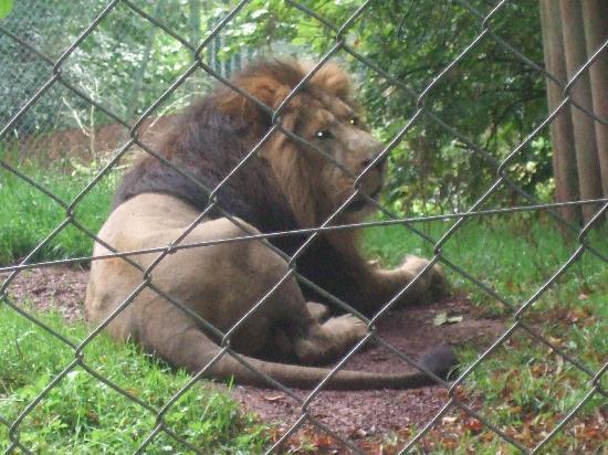 Paignton, UK: The lion