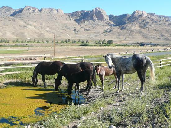 Schmalz's Red Pole Ranch and Motel: Horses to pet and feed.