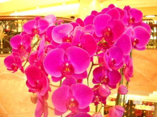 Lotte Hotel Busan: Lobby Blumen Arrangement