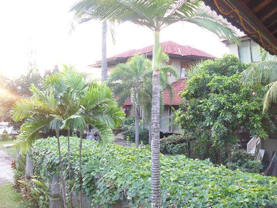 Palm Beach International Hotel: garden