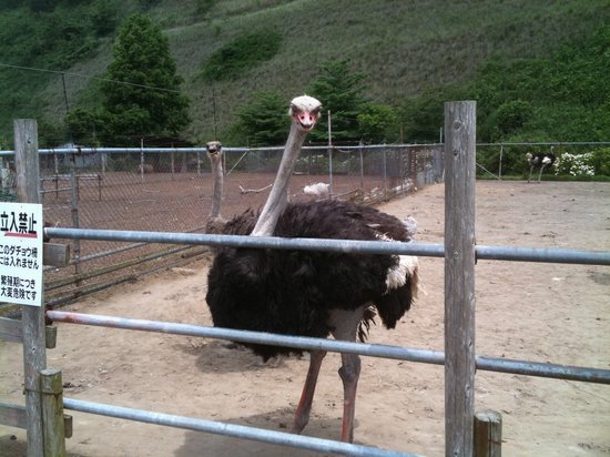 Ostrich Kingdom Sodegaura Farm
