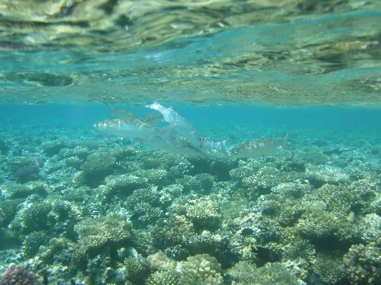 Makadi Bay, Egipt: Hausriff Madinat Makadi