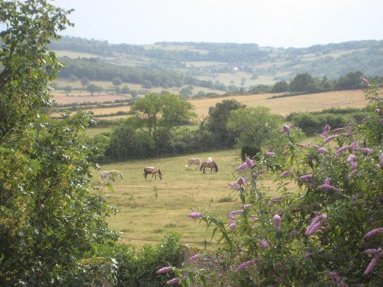 Domaine de Morlay : Les chevaux