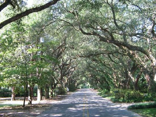 Magnolia Springs Bed & Breakfast: Oak Canopy