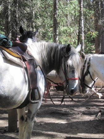 Sombrero Ranch: horses
