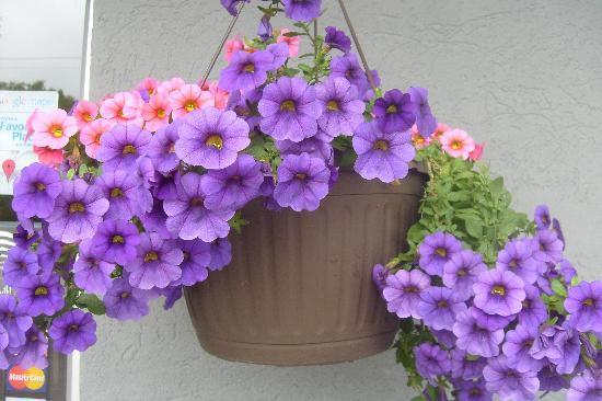 Latte Litchfield: florals outside