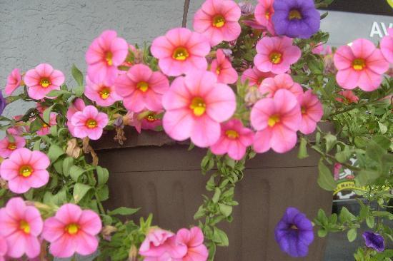 Latte Litchfield: spring flower baskets