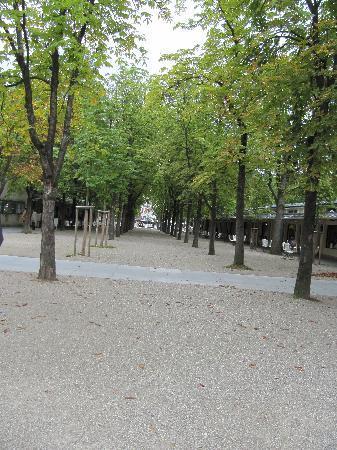 Dorint Maison Messmer: tree lined avenue outside the Dorint