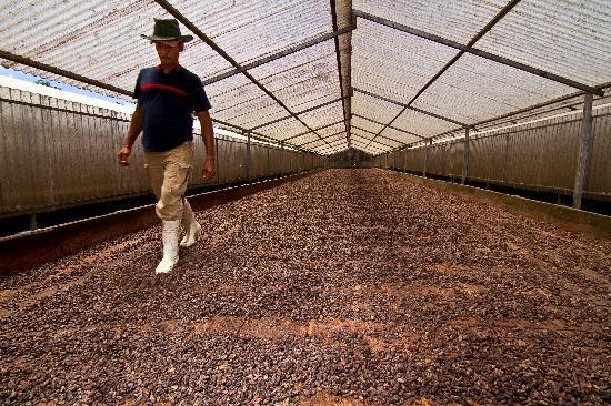 El Sendero del Cacao: Process