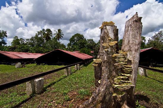 El Sendero del Cacao: vista  de los secadores