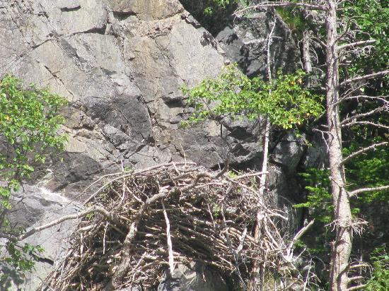 Trinity, Canada: Bald Eagle Nest