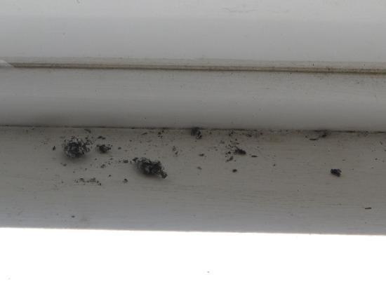 The Bay Guest House: Cigarette ash on window ledge..Eugh!