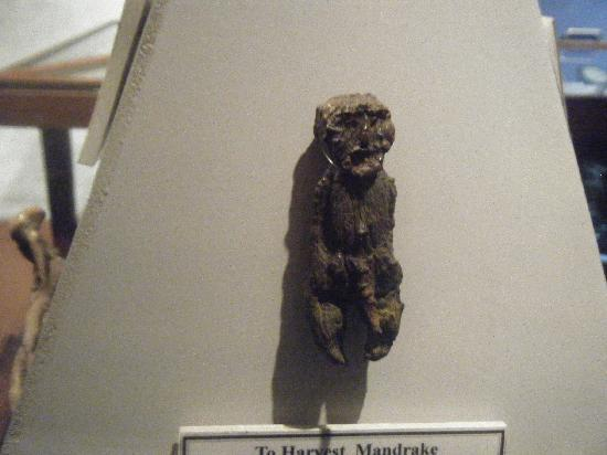 The Museum of Witchcraft: Mandrake