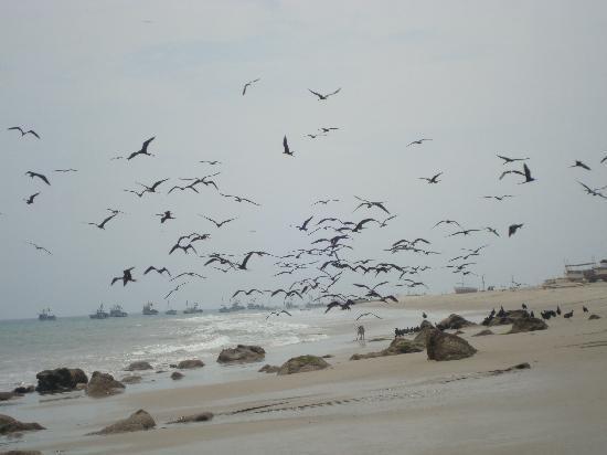 Tumbes, Peru: playa de punta sal