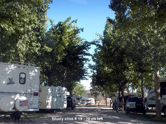 Riverside Oasis Campground & RV Park: Shady tree lined sites