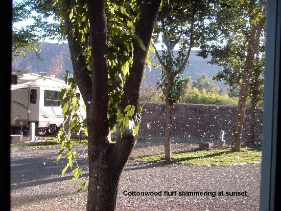 Riverside Oasis Campground & RV Park: Cottonwood fluff shimmering at sunset
