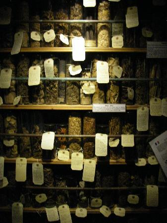 The Museum of Witchcraft and Magic: Herbs