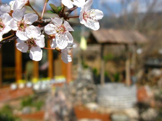 The Bruce Chalet : Spring plum again