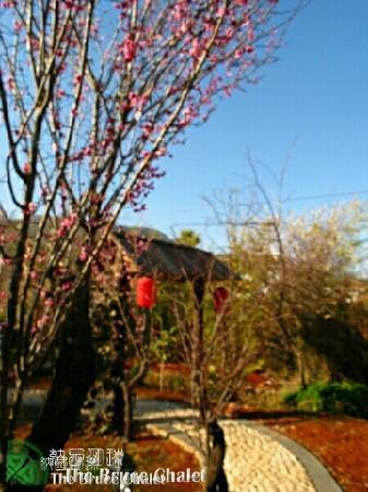The Bruce Chalet: Autumn sky