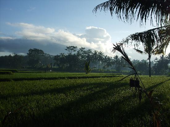 Villa Agung Khalia: Yet more wonderful views