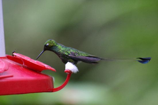 Hostería Sachatamia: Humming Bird on feeder station