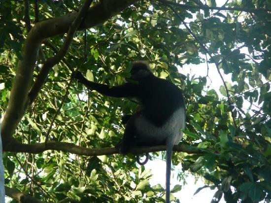 Heaven on Earth Guesthouse: Langur