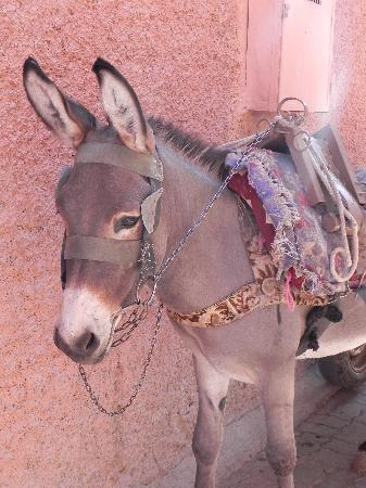 Riad Noir d'Ivoire: Cous-Cous the donkey who carries your luggage for you when you arrive and leave