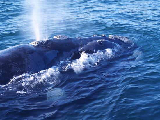 Ocean Blue: Beautiful creatures