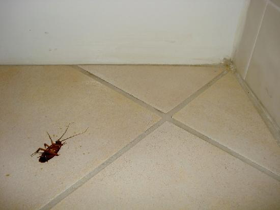Alden Suites: Large insect on bathroom floor