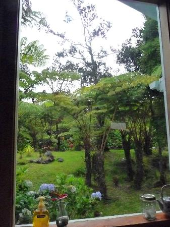 Volcano Guest House: View from the kitchen