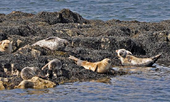 Harbour View: Seals, photographed during the lake tour