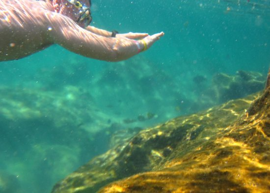Edventure Tours: Snorkelling along in Yal Ku, awsome experience