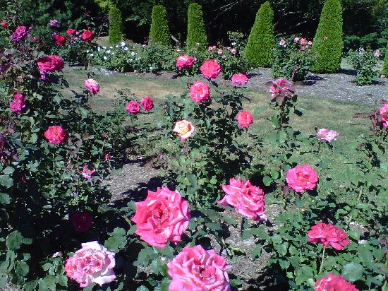 Walnut Hill Park: more gorgeous roses from the expansive rose garden