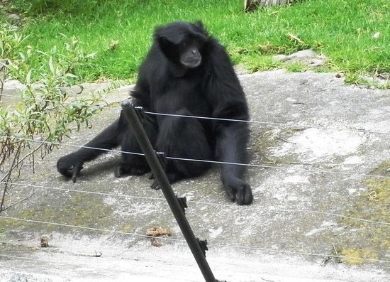 Zoologico Zacango : tristeza total y frio en mono araña