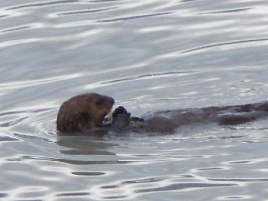 Alaska Base Camp: Otter we saw upclose-could hear him eating!!