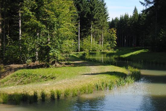 Center Parcs - Domaine des Trois Forets : Les trois forêts