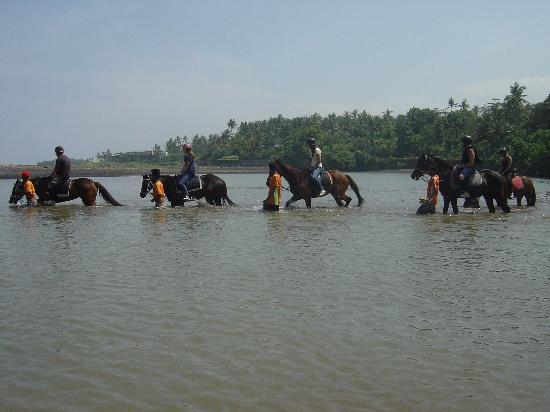 Bali Island Horse and ATV: swimming with the horses