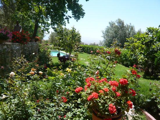 Dar Zitoune: le jardin