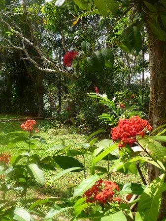 Villa Birdlake: the garden