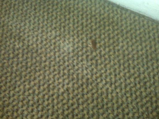 Americas Best Value Inn: Dead roach on the carpets