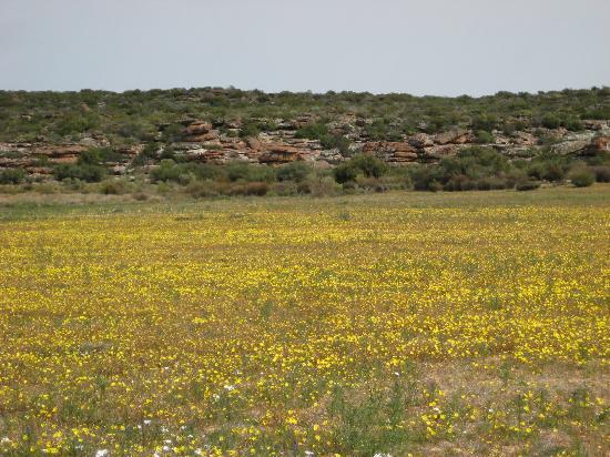 Papkuilsfontein Guest Farm: Fields of gold